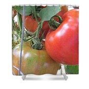 Fresh Tomatoes Ahead Shower Curtain