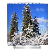 Fresh Winter Solitude Shower Curtain