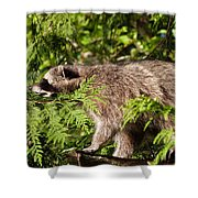 Friday May 20 2016 Shower Curtain