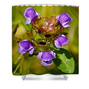 Friend Of The Flower King Shower Curtain
