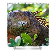 Friendly Iguana Shower Curtain