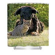 Friendships In The Animal World Is Possible Shower Curtain