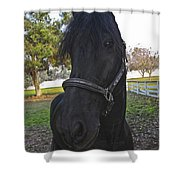 Friesian Horse Head Shower Curtain