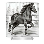 Friesian Horse Shower Curtain