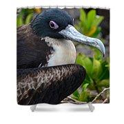 Frigate Bird In Nature Shower Curtain