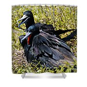Frigatebirds In Love Shower Curtain