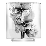 Frilly Edged Cyclamen Flowers Monochrome Shower Curtain