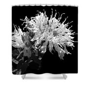 Frilly Flower Shower Curtain