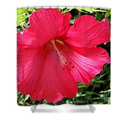 Frilly Red Hibiscus Shower Curtain