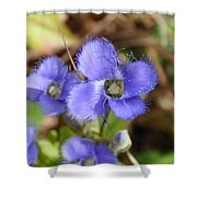 Fringed Gentian 1 Shower Curtain