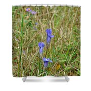 Fringed Gentian 2 Shower Curtain