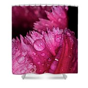 Fringed Tulip Shower Curtain