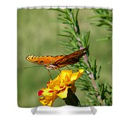 Fritillary Flitterby Shower Curtain