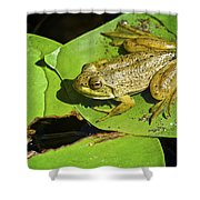 Frog 2 Shower Curtain
