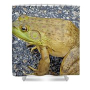 Frog Shower Curtain