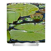 Frog Amongst The Lilypads Shower Curtain
