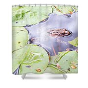 Frog And Lily Pads Shower Curtain