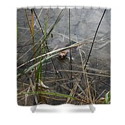 Frog Home Shower Curtain