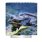 Frog In Water Shower Curtain
