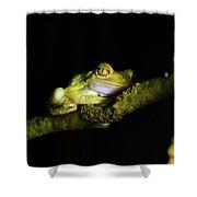 Frog Night Feeding Shower Curtain