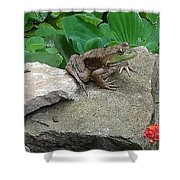 Frog On A Rock Shower Curtain