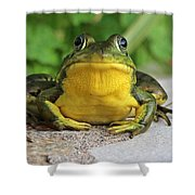 Frog On Flat Stone B  9871 Shower Curtain