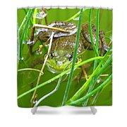 Frog Playing Hide N Seek Shower Curtain