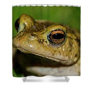 Frog Posing Shower Curtain