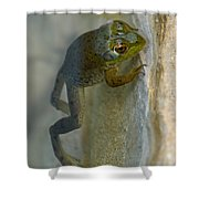Frog Swim Shower Curtain
