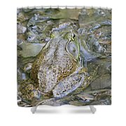 Frogs Eye View Shower Curtain