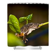 Frogs Life Shower Curtain