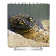 Frogzilla Shower Curtain