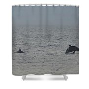 Frolicking Dolphins Shower Curtain