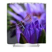 From The Water Lily Garden Shower Curtain