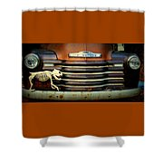 Front End Grille Of 1953 Chevrolet Advantage Design Truck With Dog Skeleton Shower Curtain