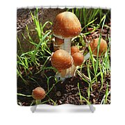 Front Pourch Mushroom Family Shower Curtain
