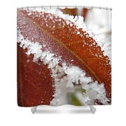 Frost And Leaf Shower Curtain