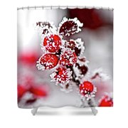 Frost Shower Curtain