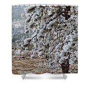 Frost-covered Pine Shower Curtain