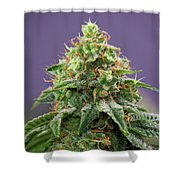 Frost Monster Shower Curtain