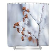 Frost On Pine Cones Shower Curtain