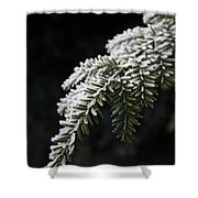 Frost On Pine Shower Curtain