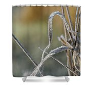 Frost On The Stems Shower Curtain