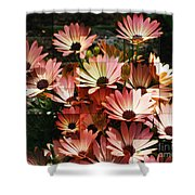 Frosted African Daisies Shower Curtain