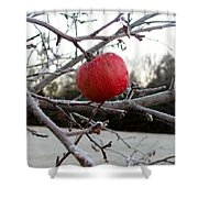 Frosted Apple Shower Curtain