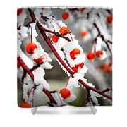 Frosted Berries Shower Curtain