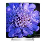 Frosted Blue Pincushion Flower Shower Curtain