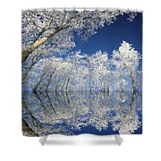 Frosted Dreams Shower Curtain