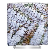 Frosted Fern Shower Curtain