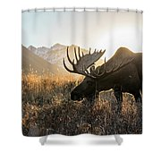 Frosted Grass For Breakfast Shower Curtain